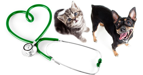 column_how-can-i-find-a-good-vet-for-my-dog-or-cat