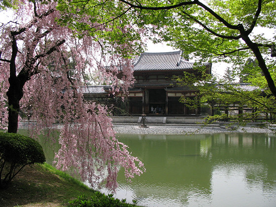 byodo-in_phoenix_hall_sakura