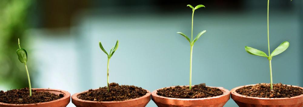 2HeroSmall_PlantsRapidGrowth_SS48719776.jpg