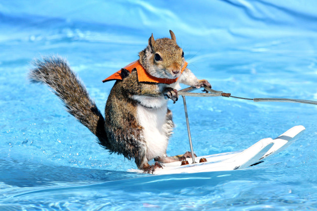 squirrel-waterskiing