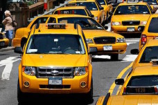 nyctaxis_600x400