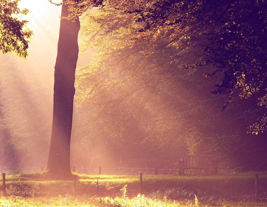 beautiful-life-light-tree-wonderful-favim-com-353459